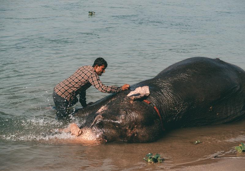 elephant bathing in chitwan