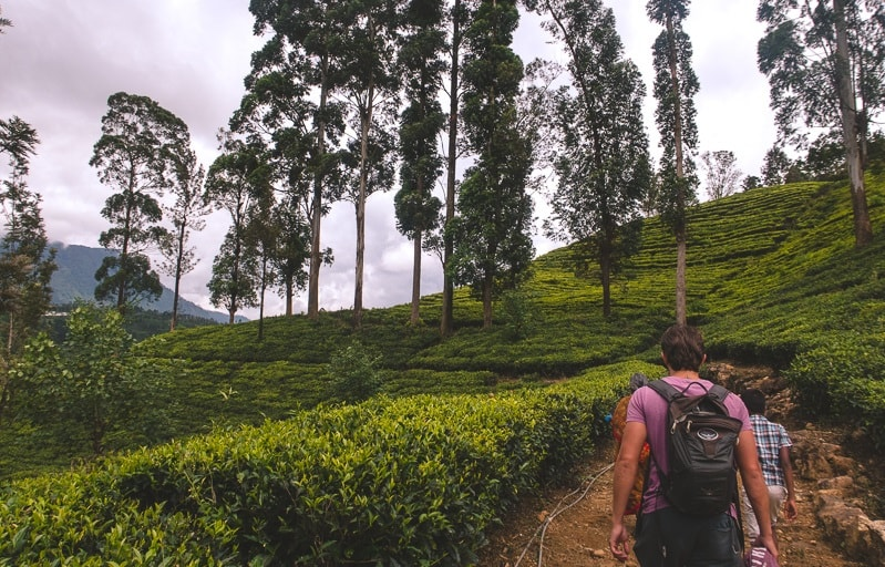 Walking through tea plantations