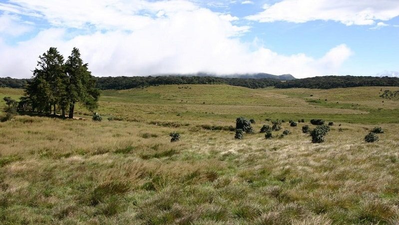 Horton Plains Nuwara Eliya