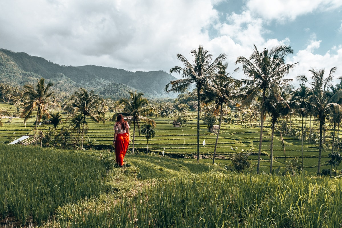 rice paddies in bali