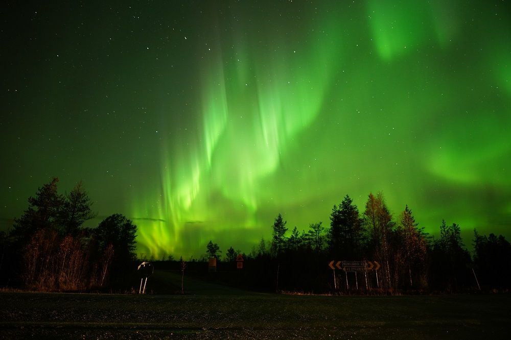 northern lights above trees