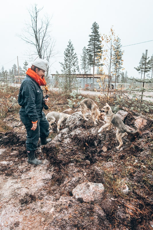 bearhill husky finland