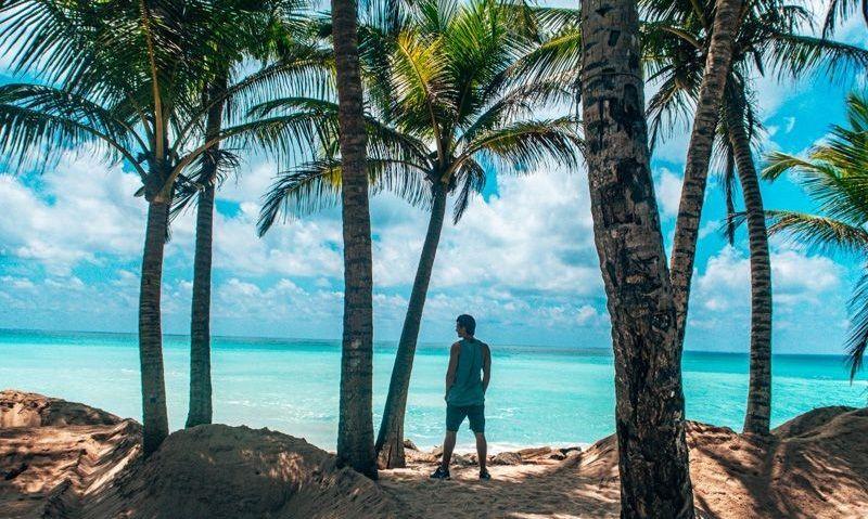 coconut trees sri lanka