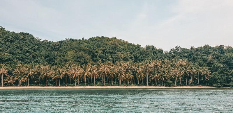 mangroves at sugba lagoon