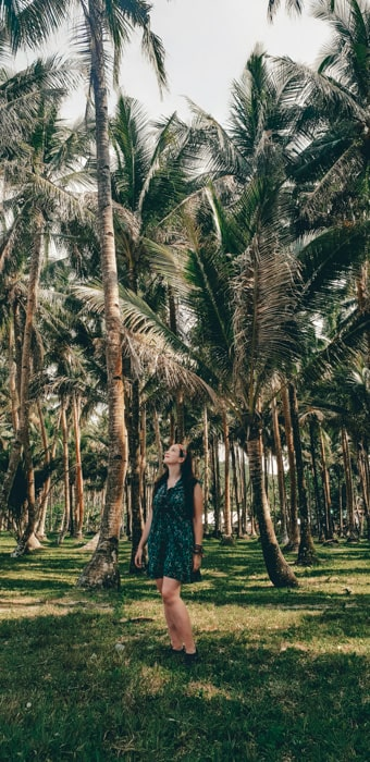 palm trees in siargao