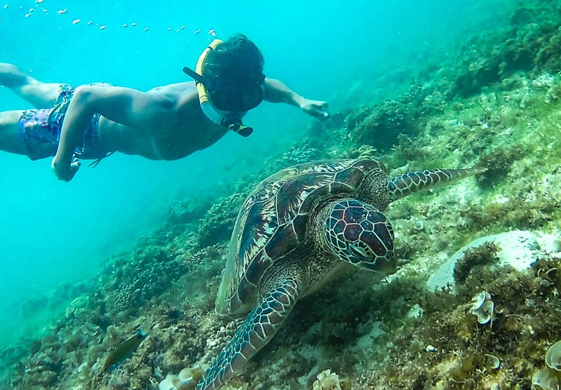 snorkelling with turtles in port barton
