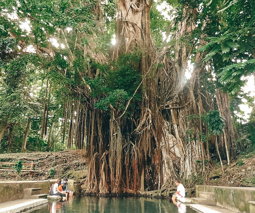 enchanted balete tree in siquijor