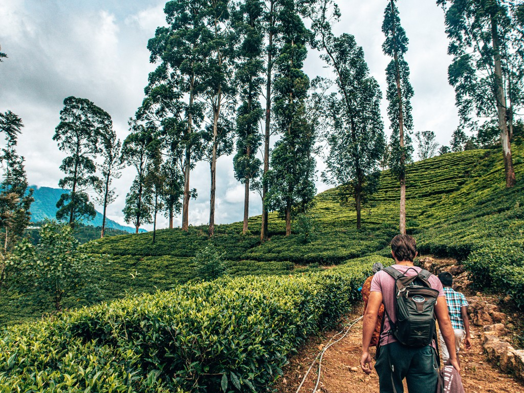 tea plantations in nuwara elyia