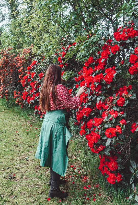 lady dixon park belfast rose gardens