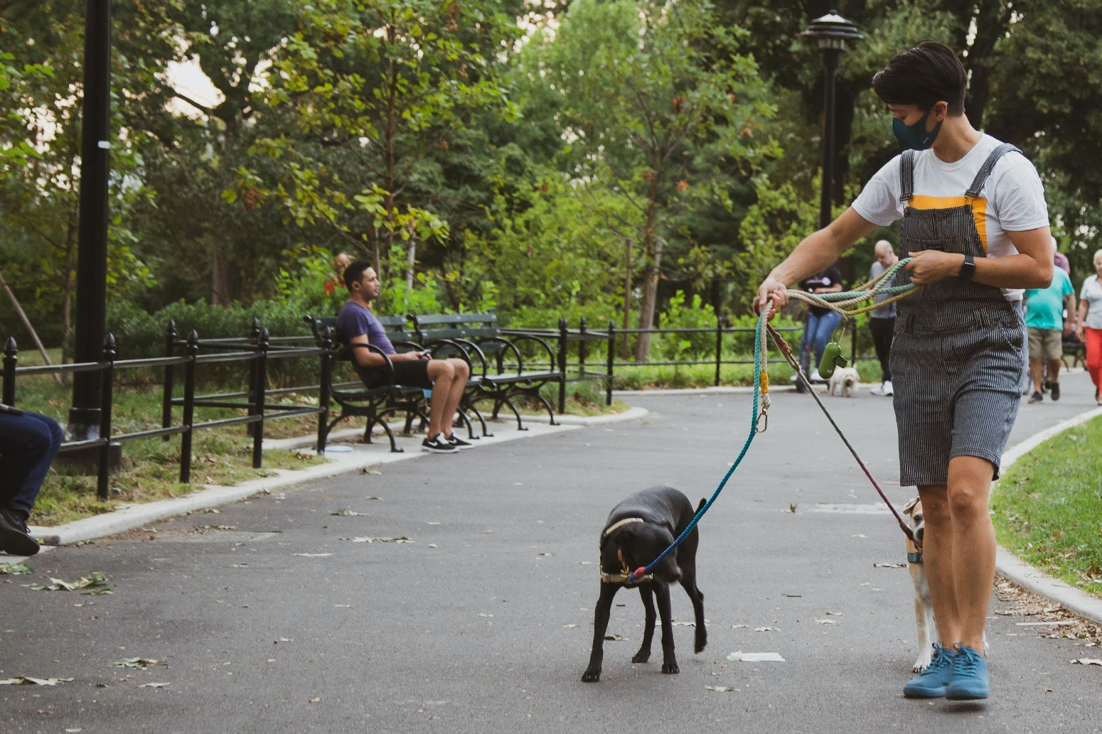 Parks are good places for dog walks and pet care