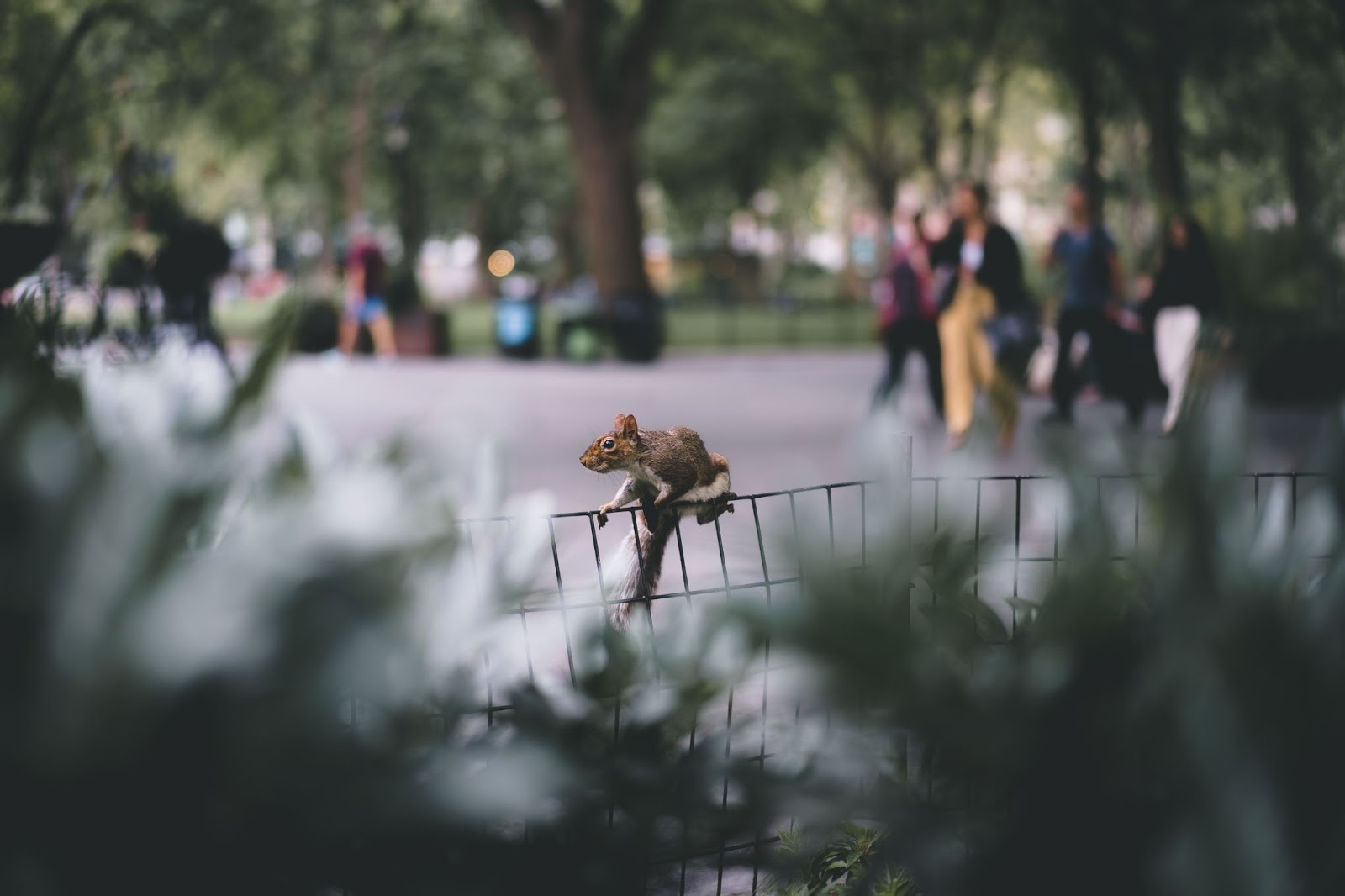 Parks and natural environment