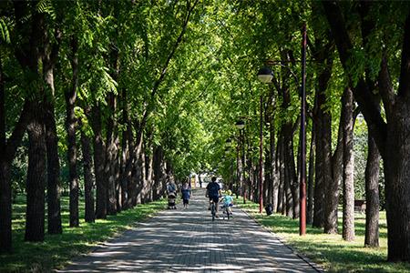 Согласованы проекты 4 скверов в Краснодаре