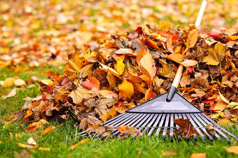 Residents Should Put Leaves In Bio Degradable Bags For Collection