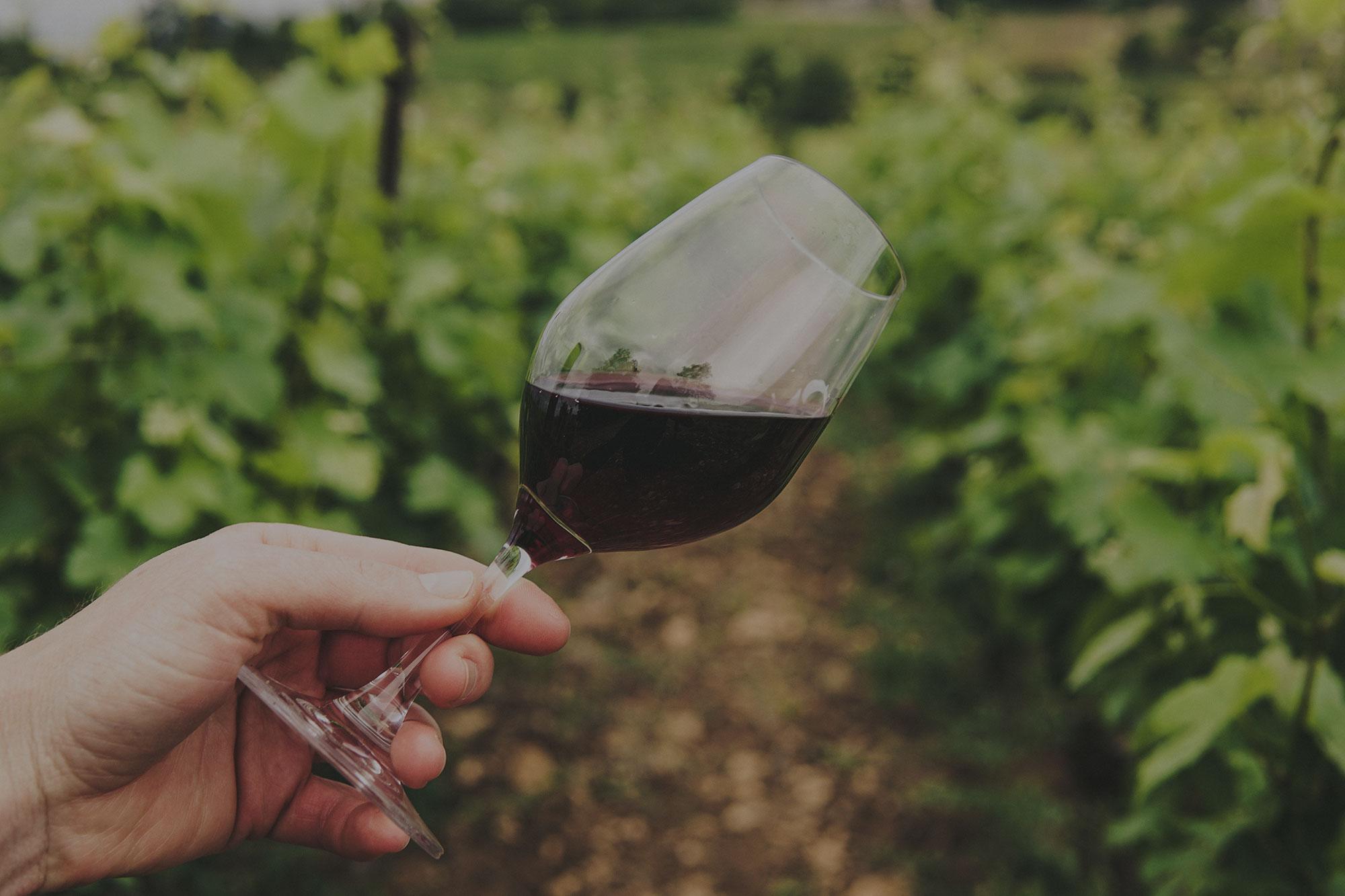 Weinglas mit Rotwein im Weinberg geschwenkt