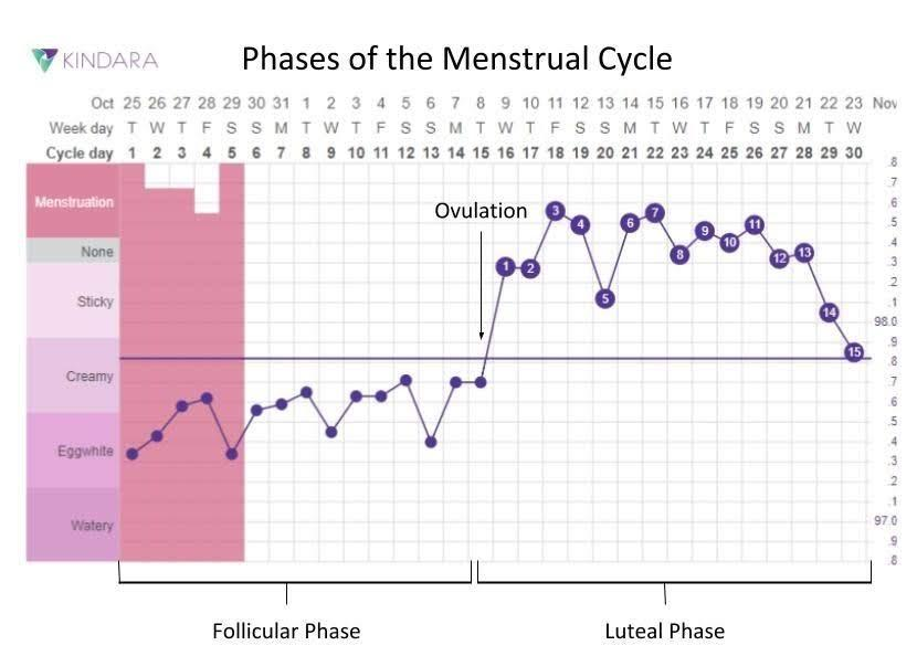 Phases of the Menstrual Cycle | Kindara Blog