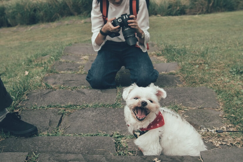 types-of-photographers-animals
