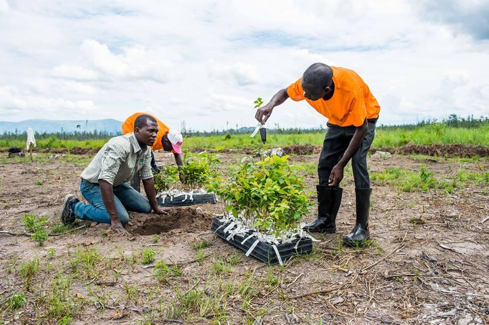 Empresa de plantação florestal preparada para alargar as acções este ano