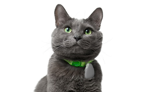 Jiobit on the collar of a cat