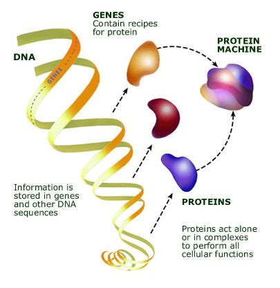 Genome Sciences/Genomics
