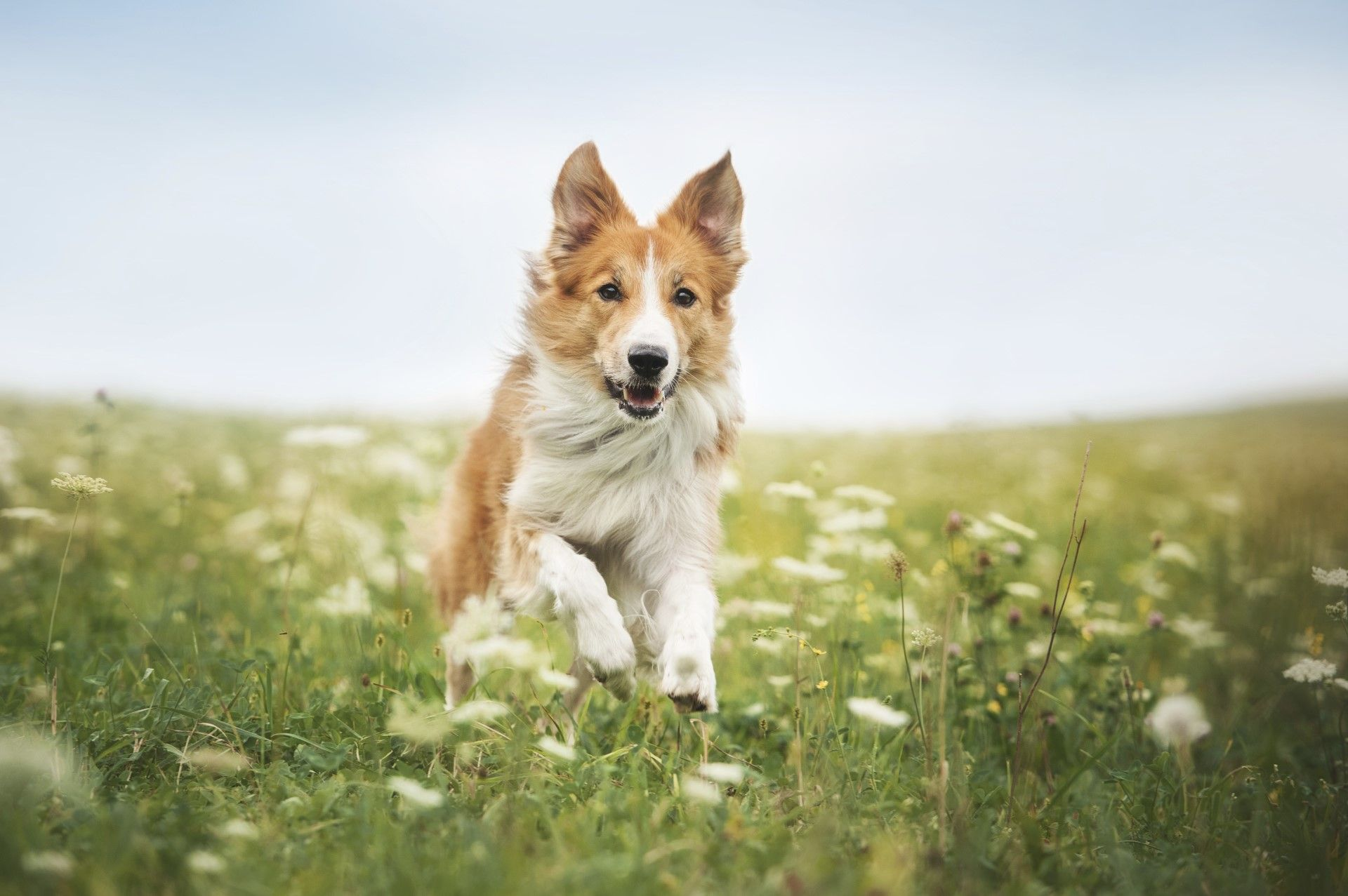 Dog friendly holiday cottages in devon