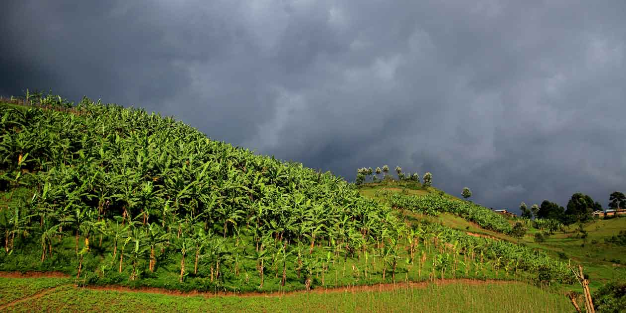 A storm gathers over farmland in the hills near Lake Mutanda, Uganda. Uganda's farmers are under threat from increasing extreme weather events.