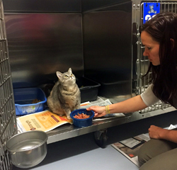 Worker Feeding a Cat