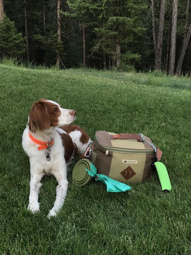 Cooper & His Kit B