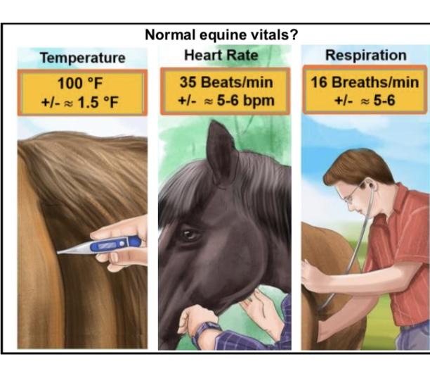 Vital Signs Chart