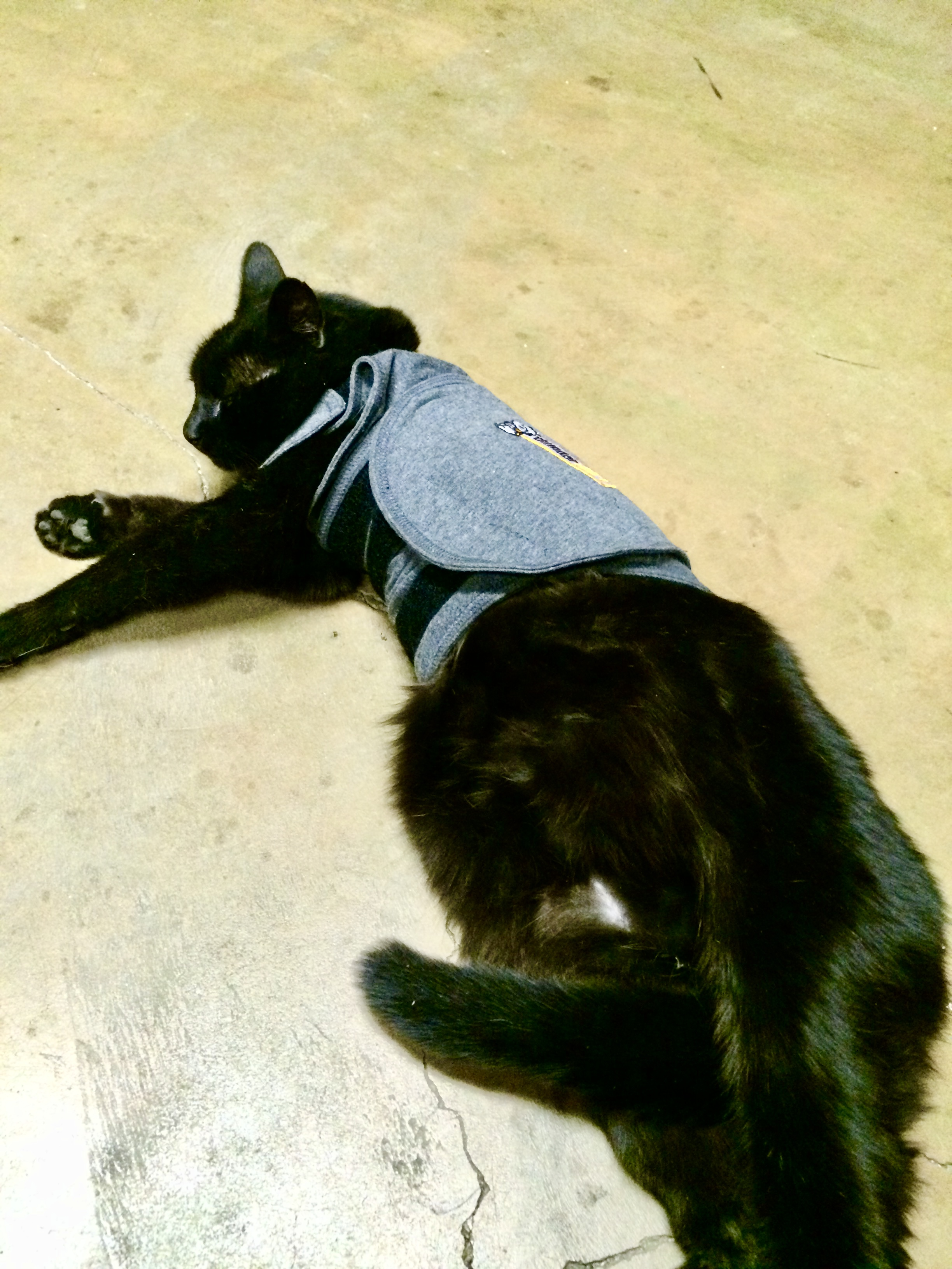 buddy in his thunder shirt