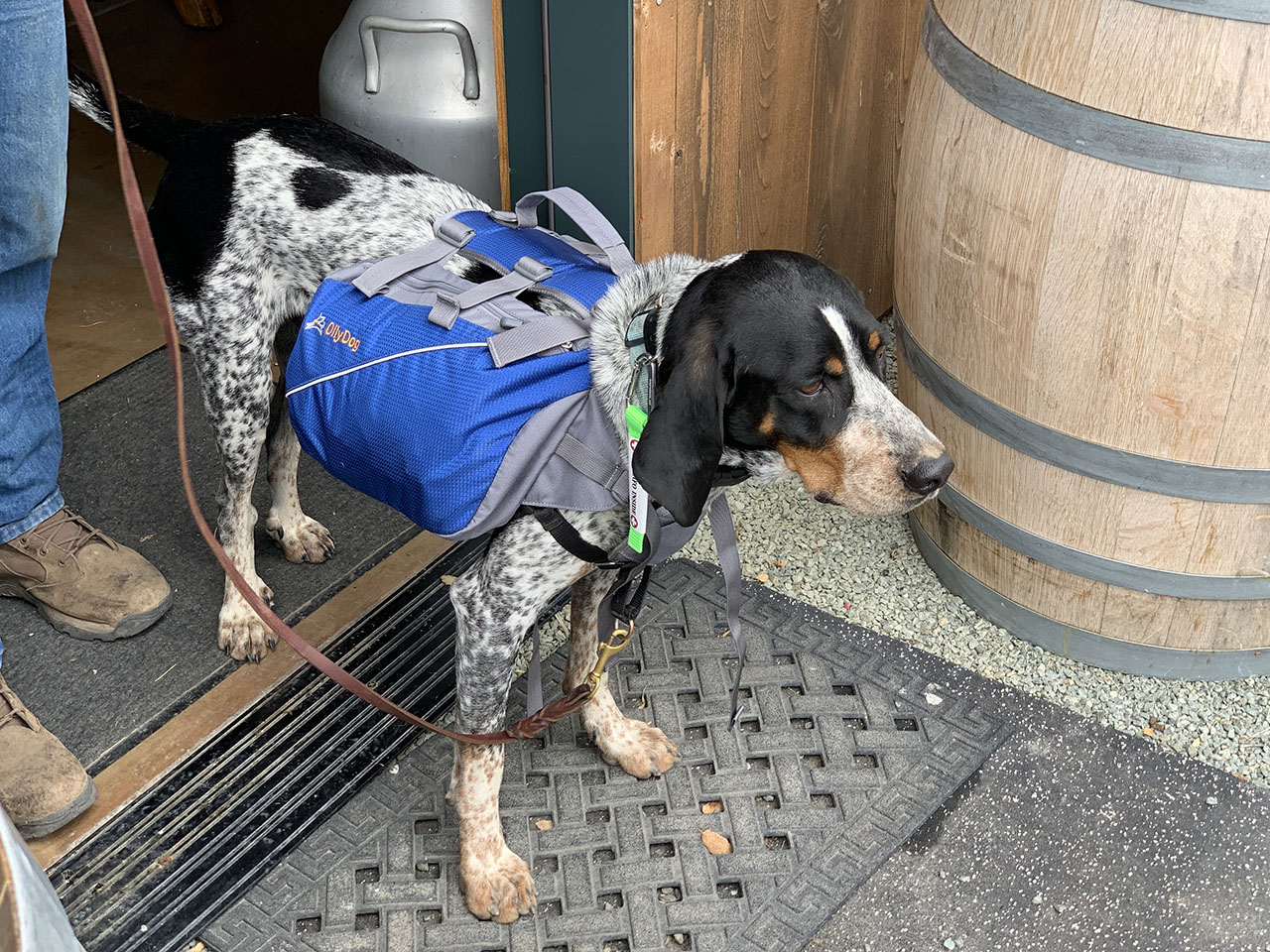 Yuka's Backpack