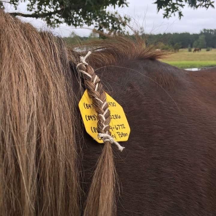 ID-livestock tag