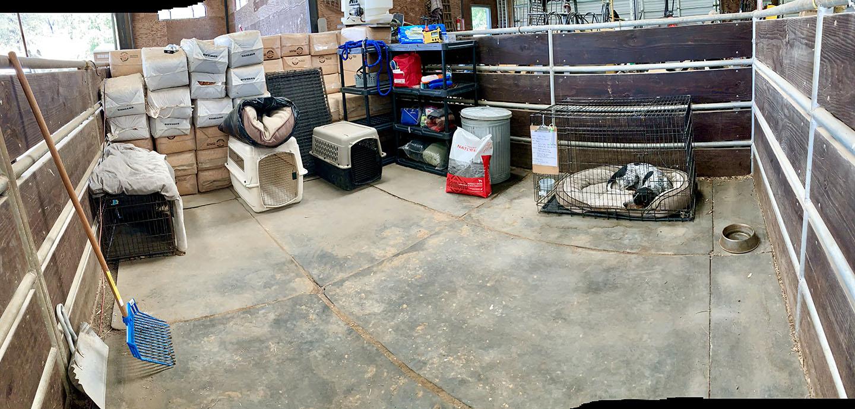 Dog SIP place