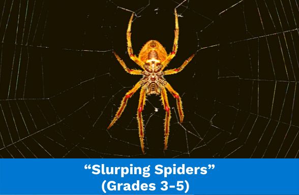 """a spider in a web at night illustrating the assignment """"Slurping Spiders"""""""