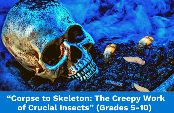 """A skull on the ground with corpse beetles and maggot illustrating the text assignment """"From Corpse to Skeleton"""""""