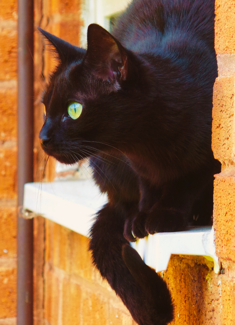 Black cat halfway out the window in a brick building