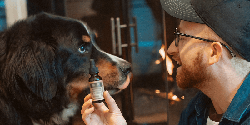 an image of a man showing cbd to his dog