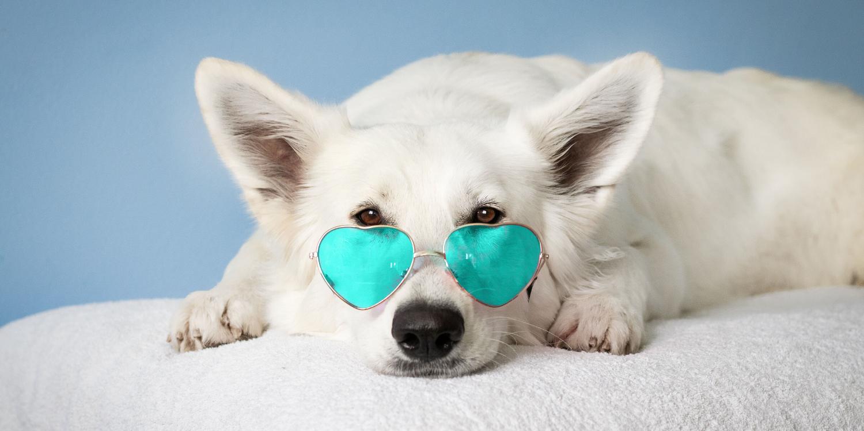 Data-Driven Pet Parent Profiles