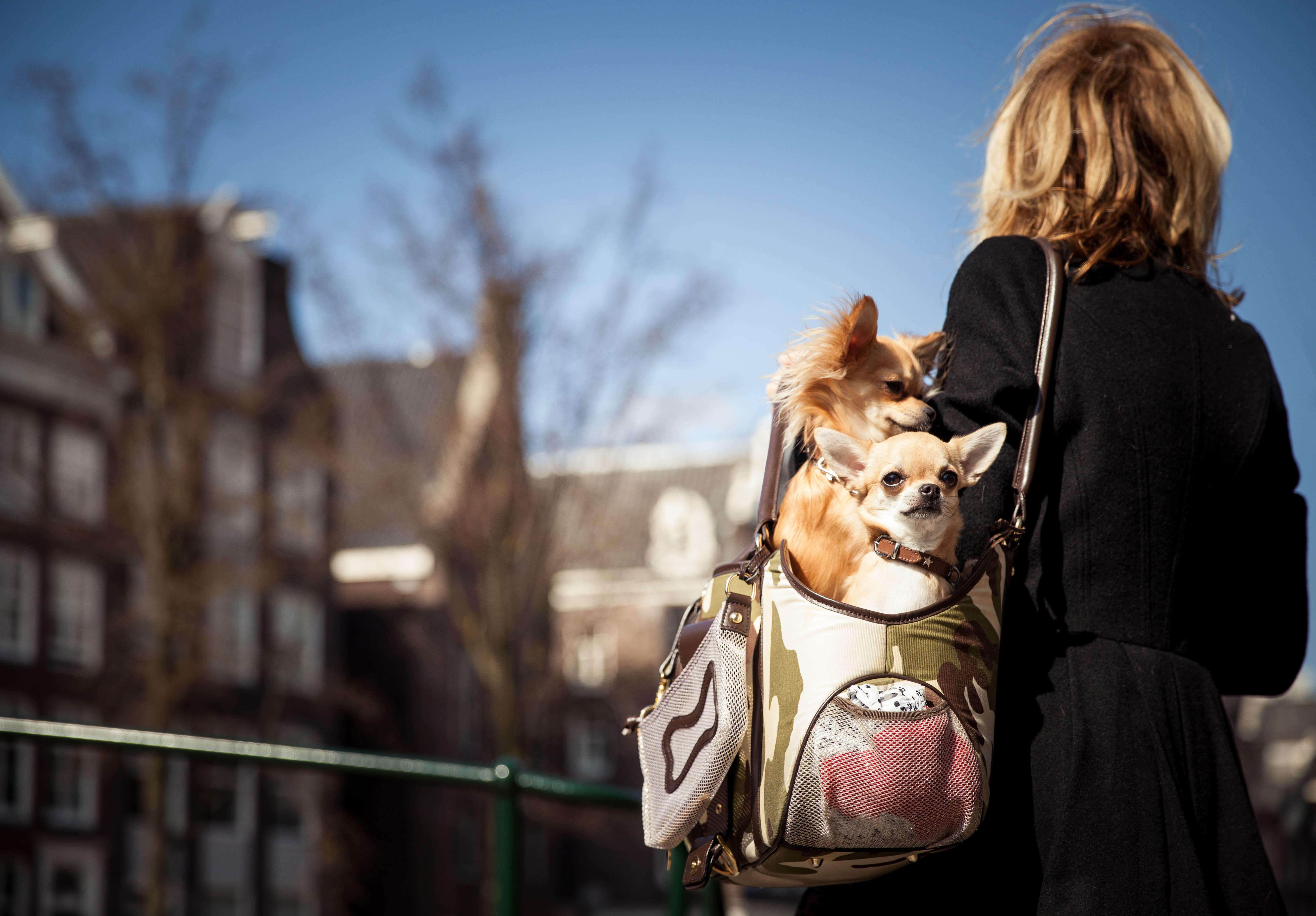 Infographic: The Customer Journey of Pet CBD Buyers