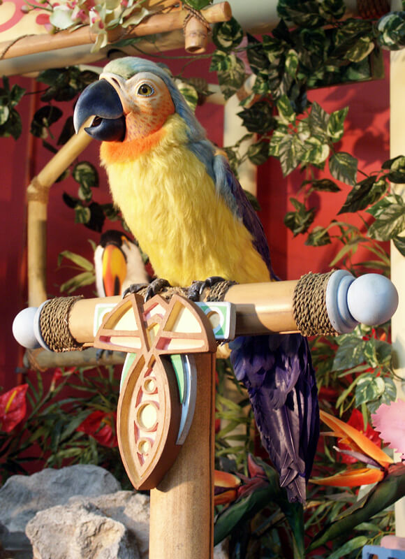 Ragga Parrot