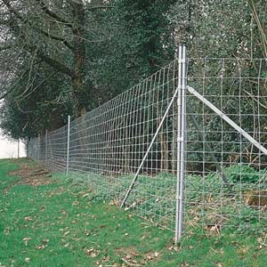 Forest Wire Fencing