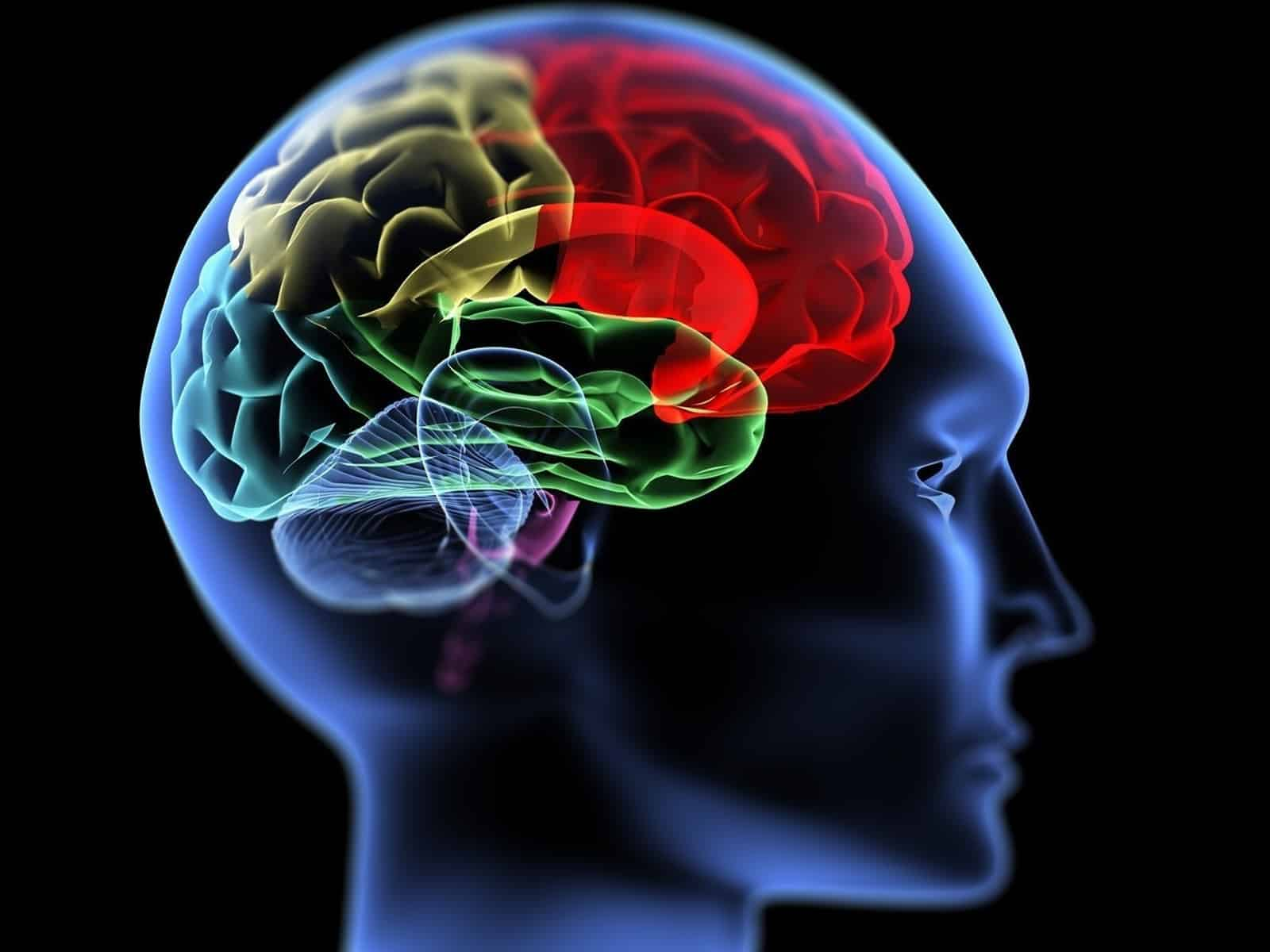 Addiction Changes Brain - Freedom From Addiction