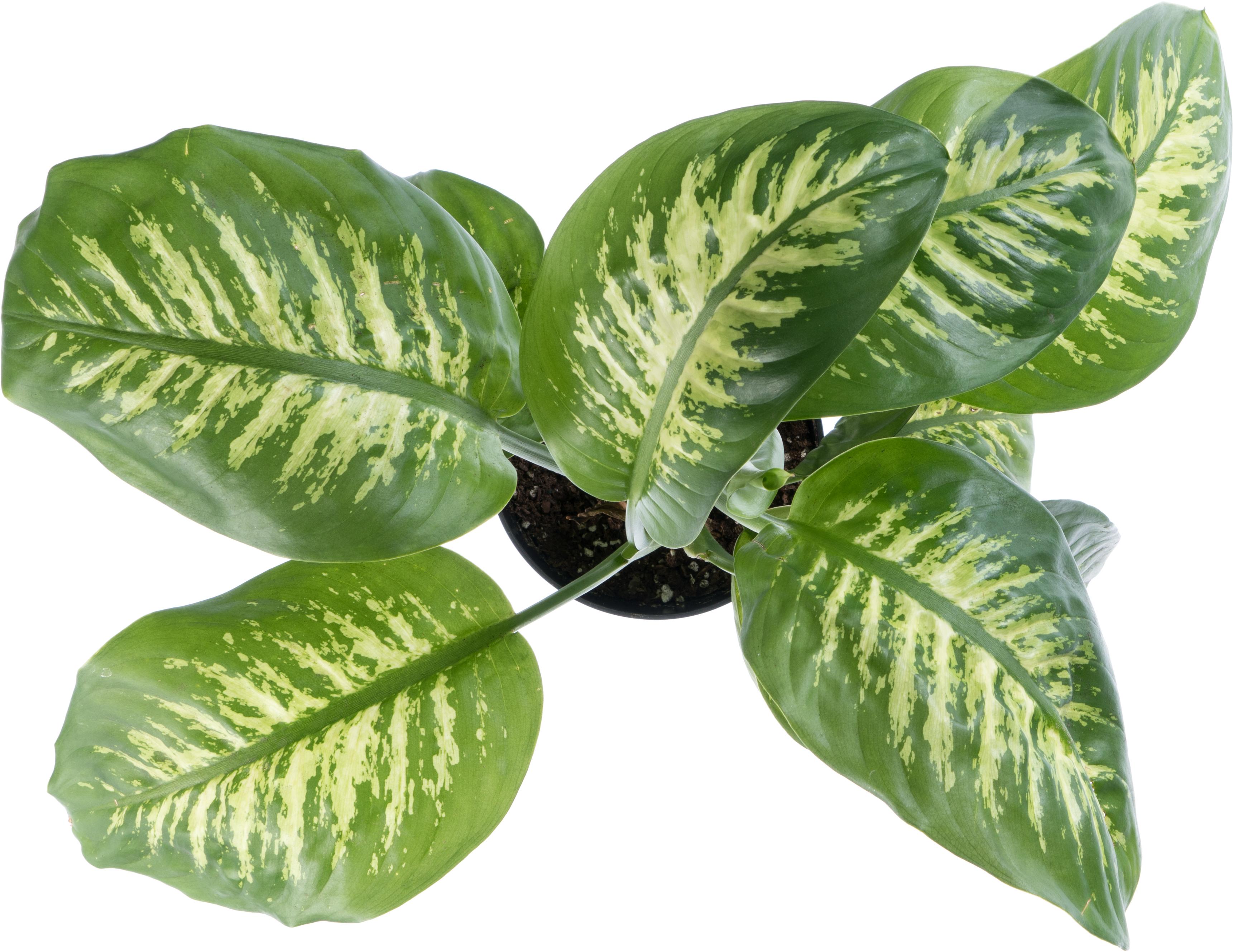 Leafy tropical plant