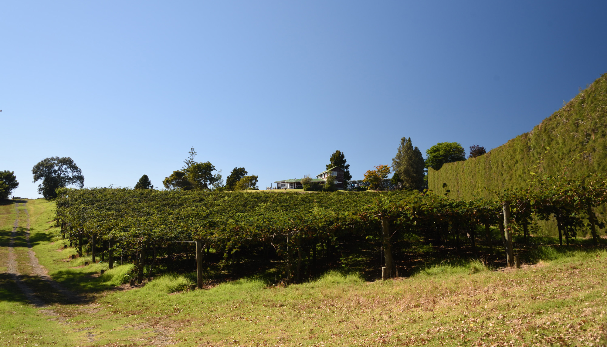 Ongare Point orchard