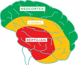 brain940