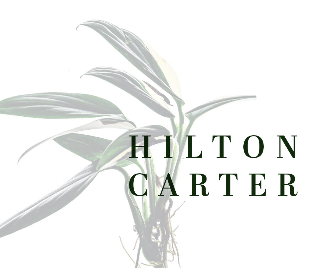 Does Hilton Carter's Organic Interiors Style Translate to Presentations?