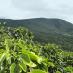 Honduras San Marcos, кофе зерновой арабика