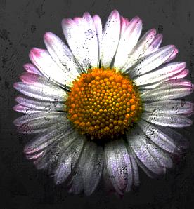 Little Flowers Community
