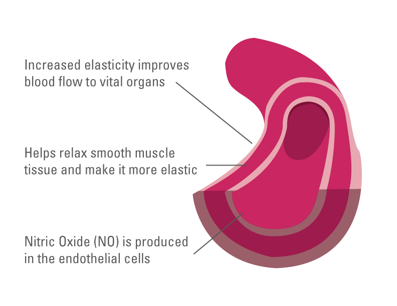 Illustration showing how Nitric Oxide helps improve blood flow