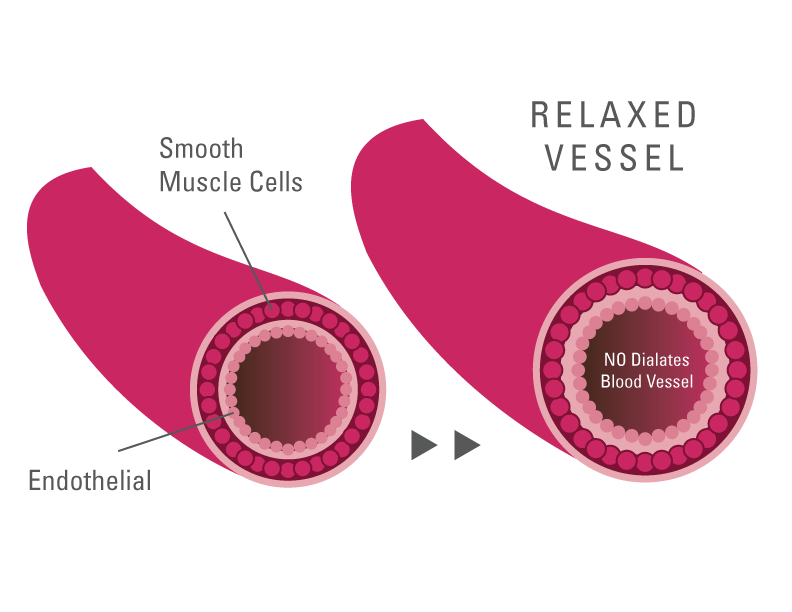 Illustration showing how Nitric Oxide helps expand blood vessels