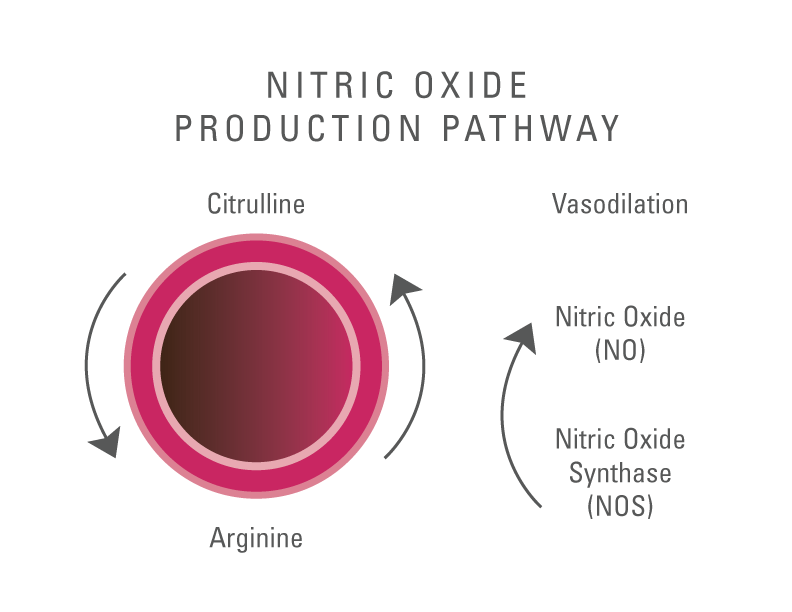 Illustration showing the Nitric Oxide Production Pathway